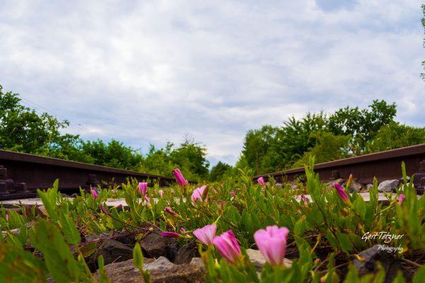 Blumen im Gleisbett